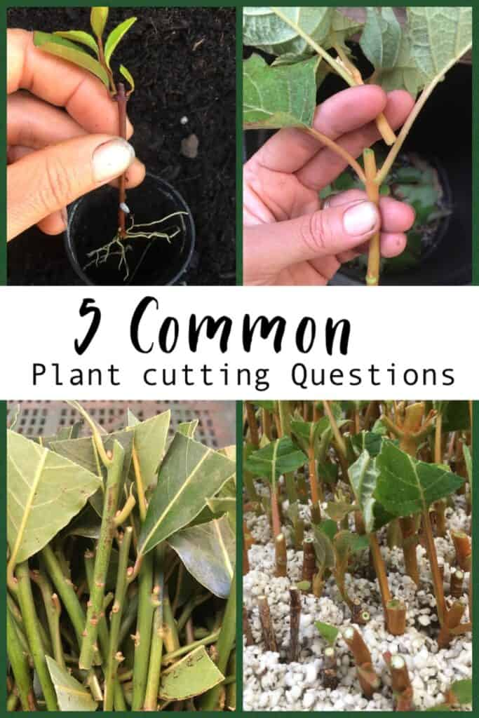 5 Common plant cutting questions