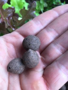 Aquaponic clayballs